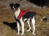 Kelly dog dressed for warmth at Long Gulch Lake