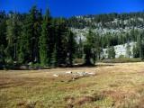 Off Trail meadow cirque near Trail Gulch Lake