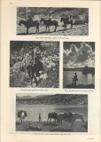 Pacific Crest Trail photos - Sunset Magazine July 1936