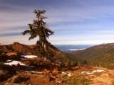 Foxtail pine near Kings Castle