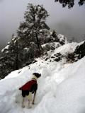 Kelly along Dillon Creek Trail