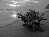 Storm stump on Pistol River Beach bw