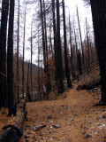 Elk Creek trail after the Oct 1, 2008 fire