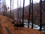 Elk Creek trail after the Oct 1, 2008 fire.