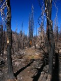 2008 fire zone