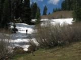 Box Camp Trail