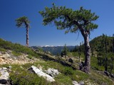 Upper Devils pine wind sculptures