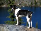 Kelly at Dogwood lake, Marbles