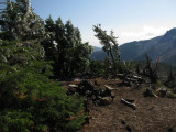Icy trees in the campsite on Park Ridge