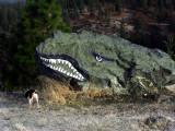 Roadside Rockadile stalks its prey!