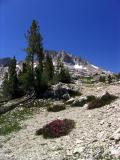 North side of Silver Pass along John Muir Trail