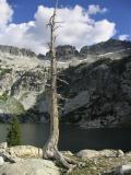 Papoose Lake white pine snag