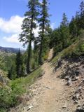 Pacific Crest Trail north from Shelly Meadows