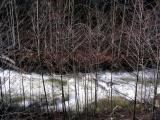 Grider Creek alders