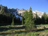 Foxtail pines in Bear Basin, Trinity Alps