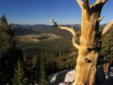 Foxtail pine snag and Big Whitney meadow