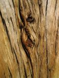 Time etched in wood