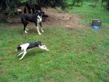Kelly zooms while Bella watches