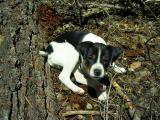 Kelly hiking dog at 8 weeks