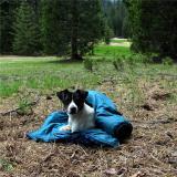 Kelly resting in meadow