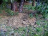 Bear bed nest