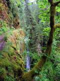 Eagle Creek trail near High Bridge