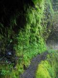 Tunnel Falls trail ledge