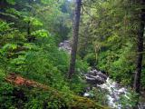 Eagle creek forest scene