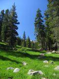 Mills creek meadows