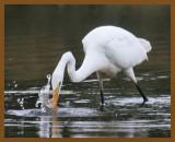 great egret-10-13-12-614b.JPG