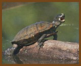 turtles_frogs_and_lizards_2