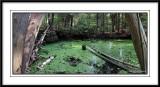 Pond at Rockwood Conservation