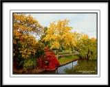 Victoria Park Fall Colours II