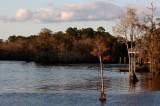 Waccamaw River_8802