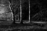 12th September 2008  three trees