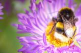 27th July 2009  bee friendly