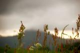 1st July 2010  misty