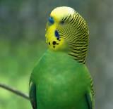 e Bird  VS Zoo  FZ35  FS only  ZP1000749.jpg