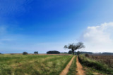 Hilltop Vista