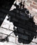 Aerial Shadow
