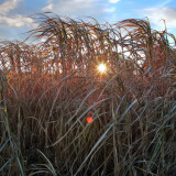 10th - Winter's Sun
