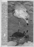 011373 cold seagull.jpg