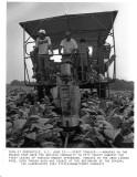 062585 harvesting tobacco.jpg