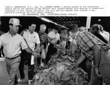 080888 tobacco market opens.jpg