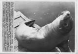 101671 sea lion.jpg