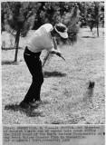 1968 golf action_1.jpg