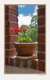 flower_in_pot