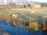 28 december 2008 - Molenpolder - Tienhoven - Loosdrecht