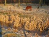 006 - natuurgebied Ruigenhoek