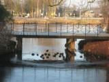007 - fort De Gagel: eendjes onder de brug